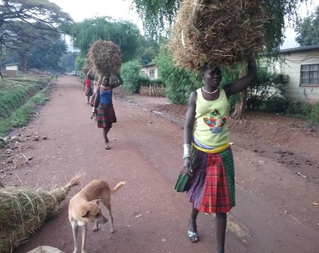 Women walk to fetch grass.jpg